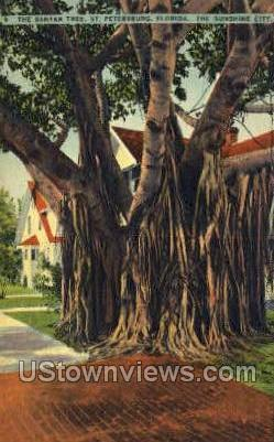 Banyan Tree - St Petersburg, Florida FL Postcard