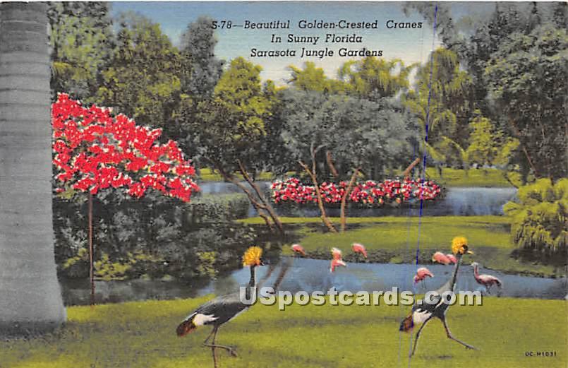 Golden Crested Cranes - Sarasota Jungle Gardens, Florida FL Postcard
