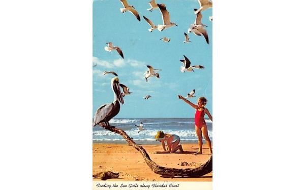Feeding the Sea Gulls along Florida's Coast Postcard