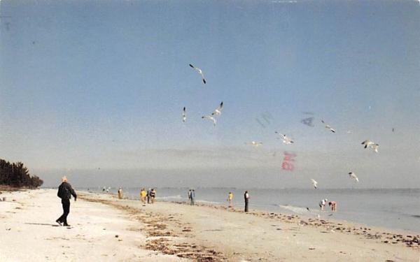 Feeding Sea Gulls on Shell strewn Beach  Sanibel Island, Florida Postcard