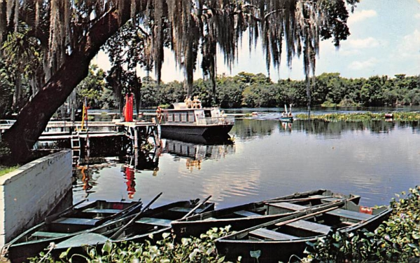 Scene on the Beautiful St. John's River St Johns River, Florida Postcard