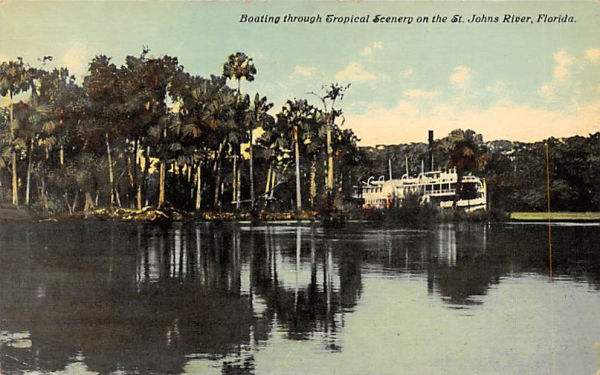 Scenery on the St. John's River, FL, USA St Johns River, Florida Postcard