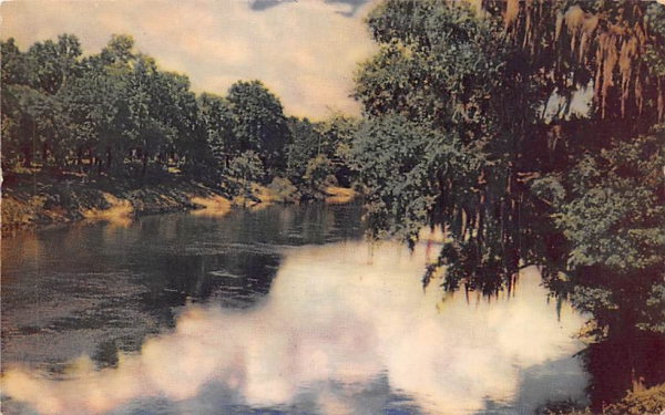 Suwannee River Florida Postcard