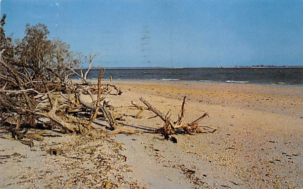 Bay side of Lighthouse Point Sanibel Island, Florida Postcard