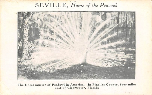 Seville, Home of the Peacock Florida Postcard
