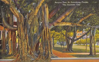Banyan Tree St Petersburg, Florida Postcard