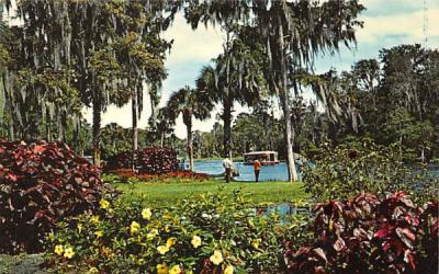 A View of World Famous Glass Bottom Boats Silver Springs, Florida Postcard