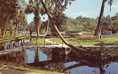 A Beautifully Landscaped, 100-acre park Silver Springs, Florida Postcard