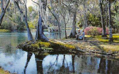 A Beautiful Florida Scene Postcard