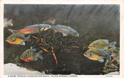 A Scene Through Glass-Bottom Boats Silver Springs, Florida Postcard