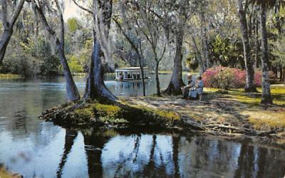 A Beautiful Flordia Scene Silver Springs, Florida Postcard