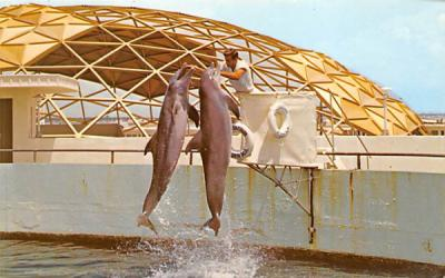 A Double Jump by the Porpoise delights the Audience St Petersburg, Florida Postcard