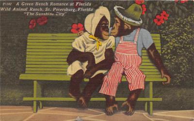 A Gren Bench Romace at Florida, USA Postcard