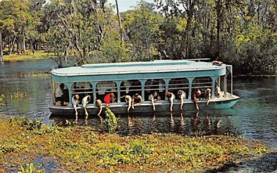 A new Glass-Bottom Boat, 14 beautiful Spring groups Silver Springs, Florida Postcard