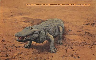 A Native of St. Petersburg, FL, USA St Petersburg, Florida Postcard