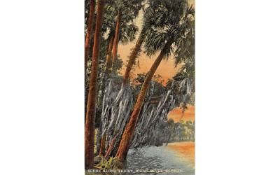 Scene Along the St. John's River, FL, USA St Johns River, Florida Postcard