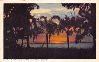 A Gorgeous Sunset in Tropical Florida, USA Postcard