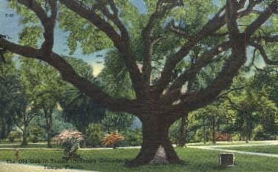 University of Tampa - Florida FL Postcard
