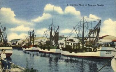Shrimp Fleet   - Tampa, Florida FL Postcard