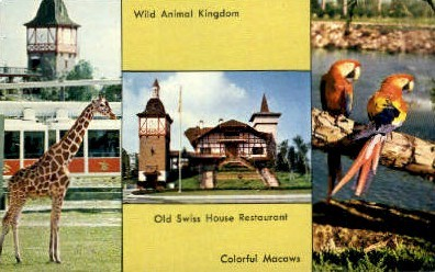 Wild Animal Kingdom - Tampa, Florida FL Postcard