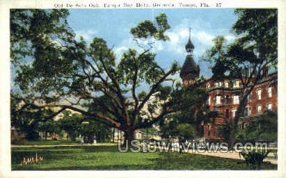 Old De Soto Oak - Tampa, Florida FL Postcard