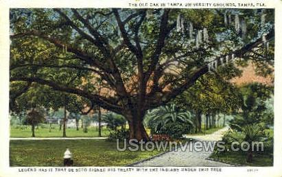 Old Oak - Tampa, Florida FL Postcard