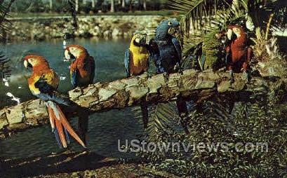 Macaws - Tampa, Florida FL Postcard