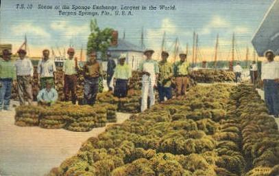 Sponge Exchange - Tarpon Springs, Florida FL Postcard