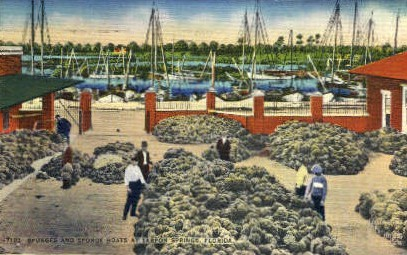 Sponge Catch - Tarpon Springs, Florida FL Postcard