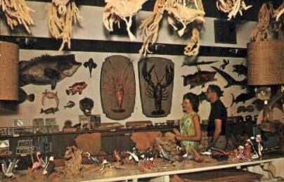 Dolphin Curio Shop - Tarpon Springs, Florida FL Postcard