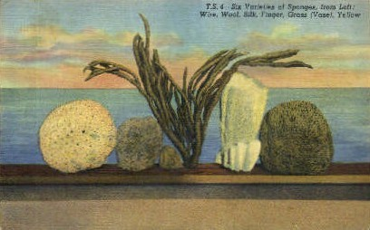 Sponge Varieties - Tarpon Springs, Florida FL Postcard