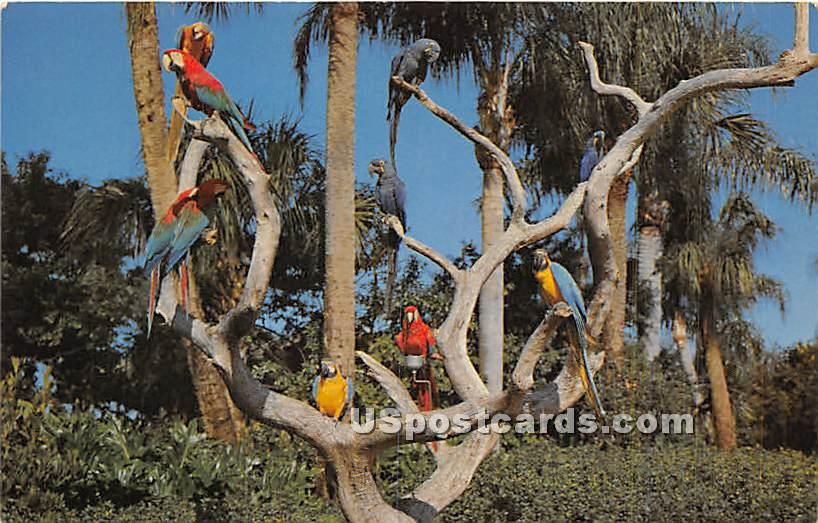 The Parrot Tree - Tampa, Florida FL Postcard