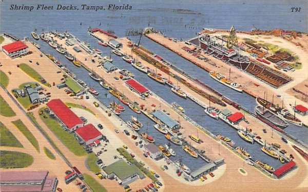 Shrimp Fleet Docks Tampa, Florida Postcard
