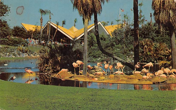 Nesting Flamingos Tampa, Florida Postcard