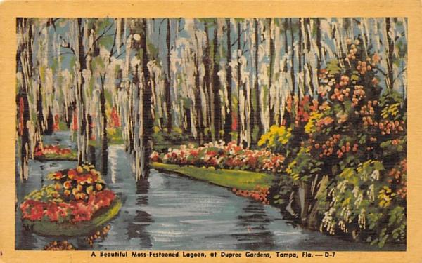 Beautiful Moss-Festooned Lagoon, Dupree Gardens Tampa, Florida Postcard