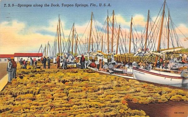 Sponges along the Dock Tarpon Springs, Florida Postcard
