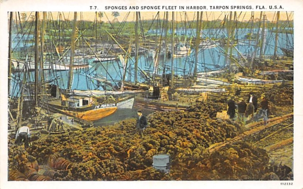 Sponges and Sponge Fleet in Harbor Tarpon Springs, Florida Postcard