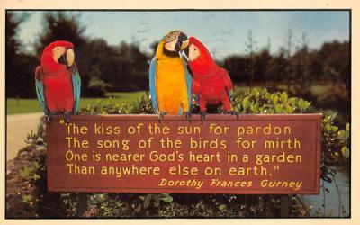 A scene at Busch Gardens Tampa, Florida Postcard