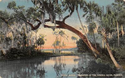 Banks of the Tomoka River, FL, USA Florida Postcard