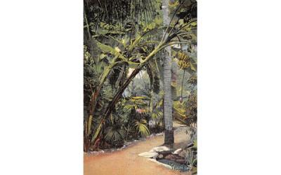 Banana Tree Showing Bud and Fruit Vero Beach, Florida Postcard
