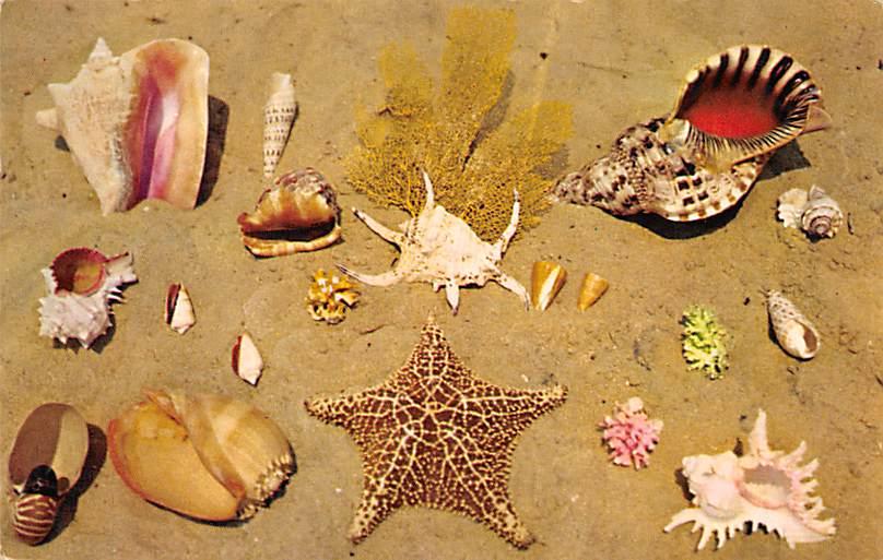 Shells FL