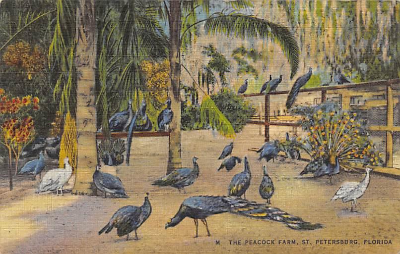 Peacocks FL