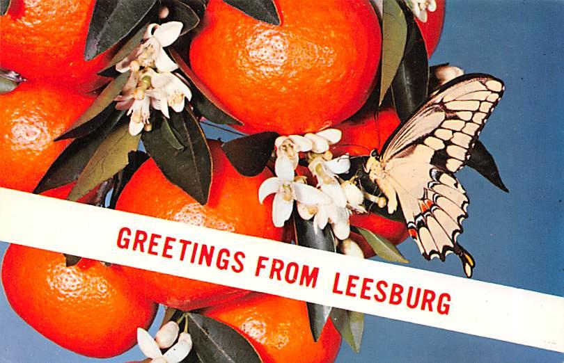 Tangerines FL