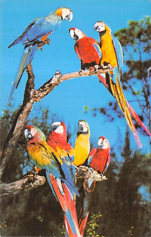 Parrots FL