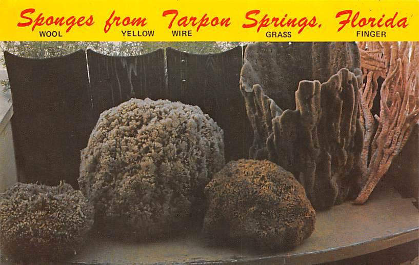 Tarpon Springs FL