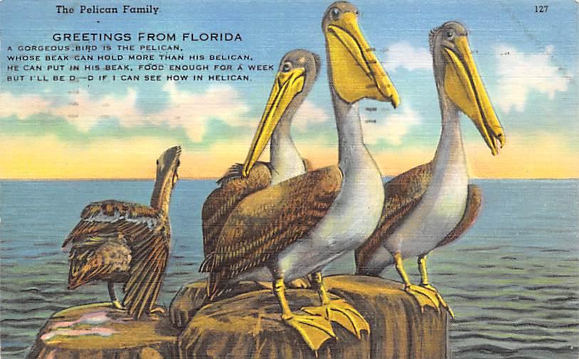 Pelicans FL