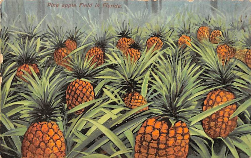 Pineapple FL