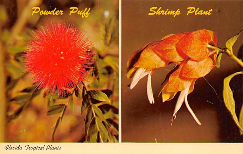 Plants FL