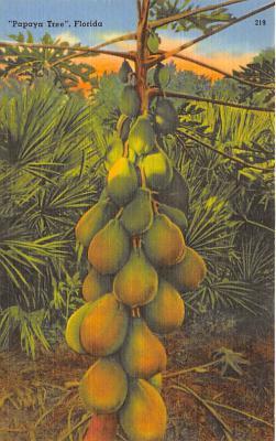 Papaya Tree FL