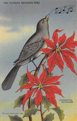 Birds FL